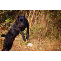 Kennel Breed Dogs