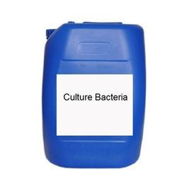 Bacterial Culture aerobic