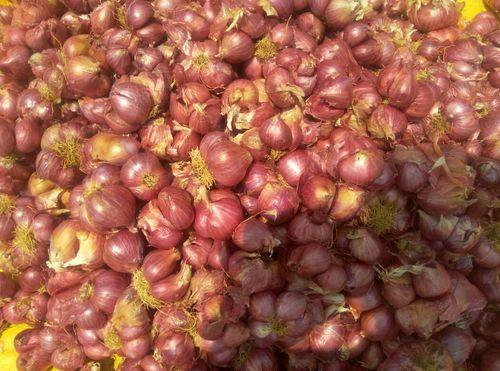 Sambar Onion or Small Onion
