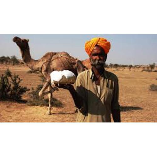 Organic Camel Milk