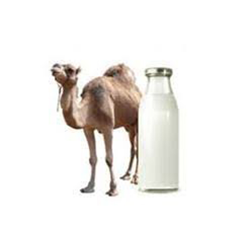 Natural Camel Milk