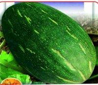 Pumpkin - F1 Ujwal Seed
