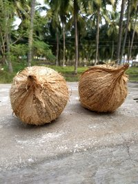 Semi Coconut