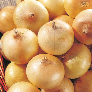 Fresh Onion Yellow Onion