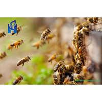 Honey Bee Pest Services
