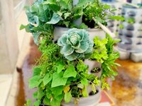 Edible Gardening Planters