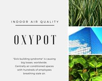 Indoor Air Purifier Plants