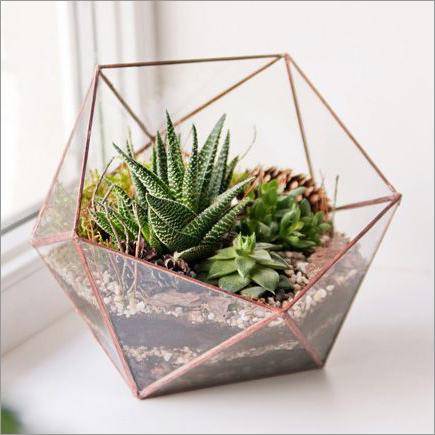 Glass terrarium succulents window sill