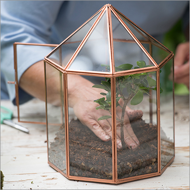 Plant Terrariums Manufacturer Plant Terrariums Supplier Exporter India
