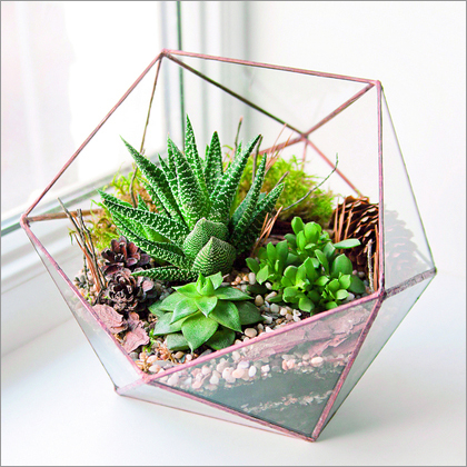 Rose Gold Terrariums Manufacturer Rose Gold Terrariums Supplier