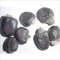 Bhilawa Seeds