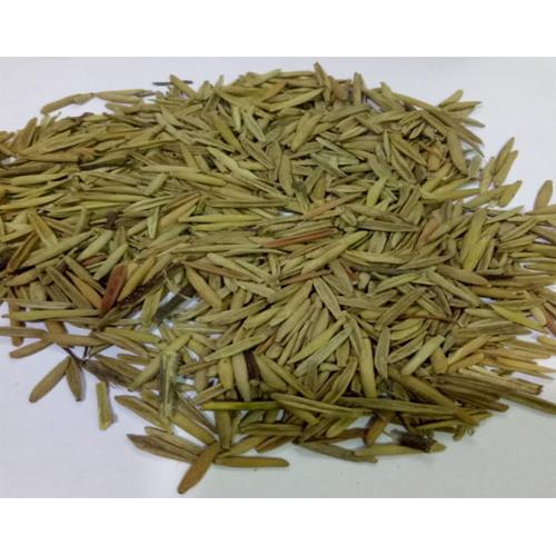 Indrajav Seed