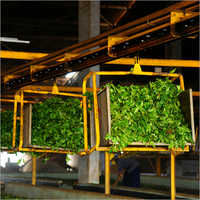 Tea Factory Tour
