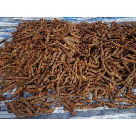 Dry Sugandh Mantri Root