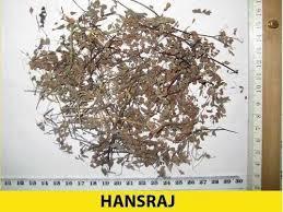 HANSARAJ