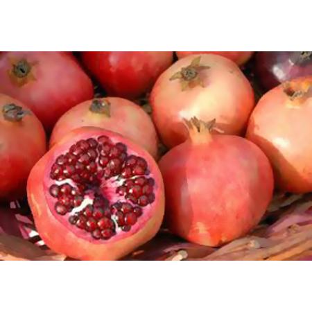 Fresh Fruits - Fresh Fruits Manufacturers & Suppliers