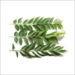 Fresh Curry Leaf