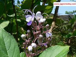 BHARANGI