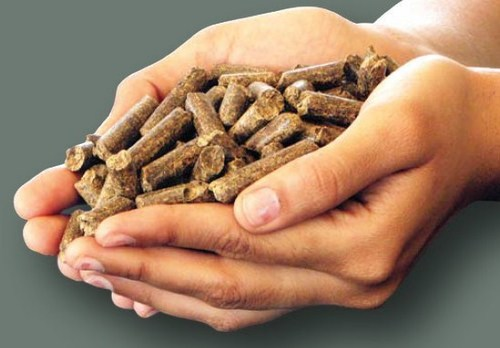 Firewood Fuel