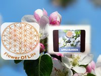 Apple blossom glycerinsoap