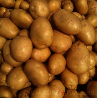 Fresh Yellow Potato
