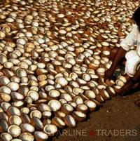 Indian Coconut Copra