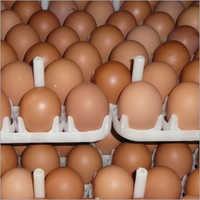 AP95 Broiler Hatching Eggs
