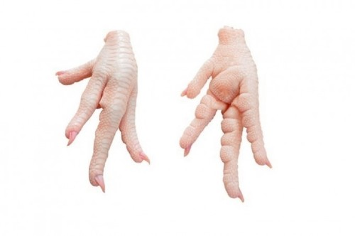 Halal Quality Frozen Chicken Paws