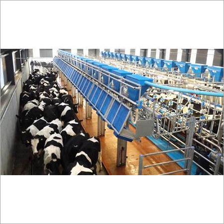 Rapid Exit Milking Parlour