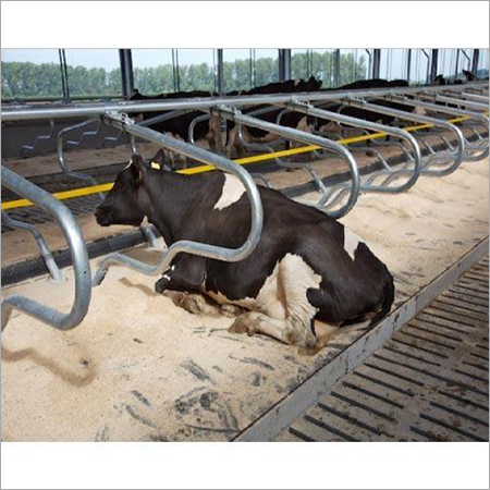 Adjustable Cow Cubicles