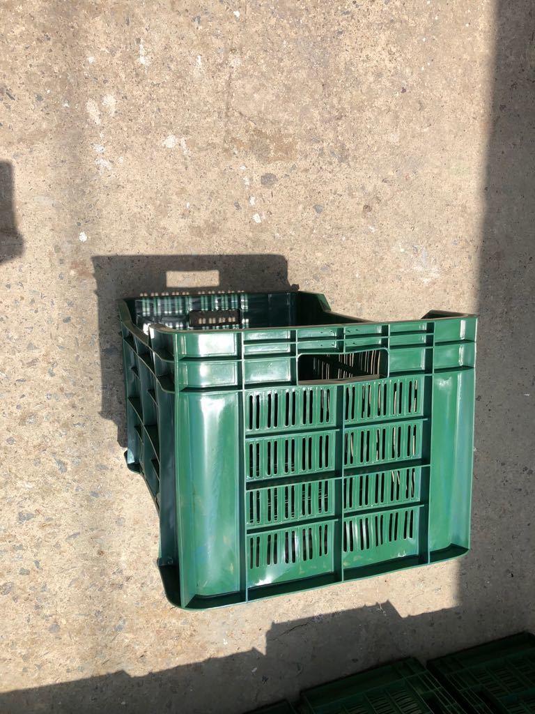 Grapes Plastic Fruit Crates