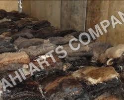 Raw Goat Skins