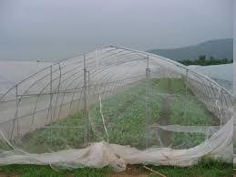 Insect nets