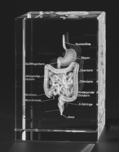 3D human Intestine Engraved