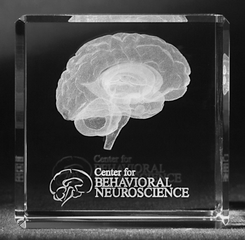 3D Brain Engraved in Crystal
