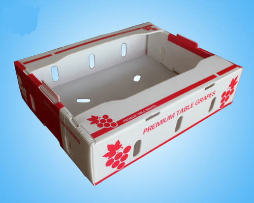 Foldable Plastic Corrugated Grape Box