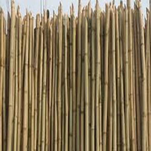Assam Bamboo