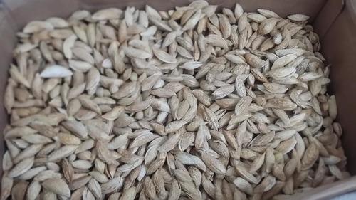 Sitar Bhai Badam