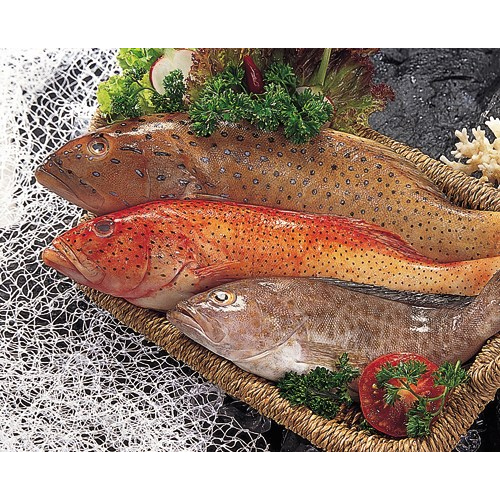 Grouper Fish, Grouper Fish Manufacturers & Suppliers, Dealers