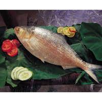 Hilsa Fish (Hilsa Ilisha)