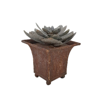 Decorative Pot with plant