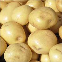 Fresh Potato<