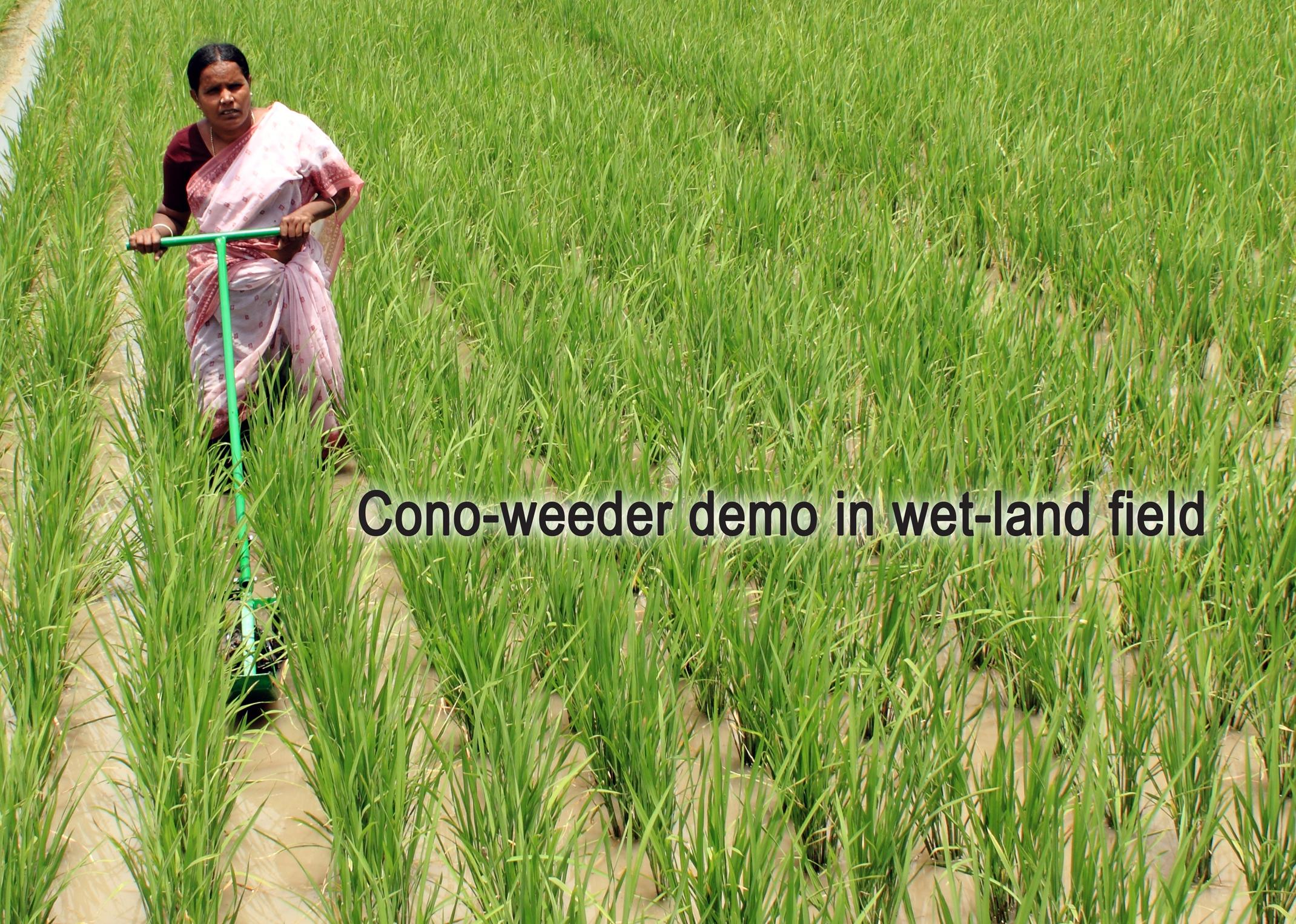 Rice Weeder
