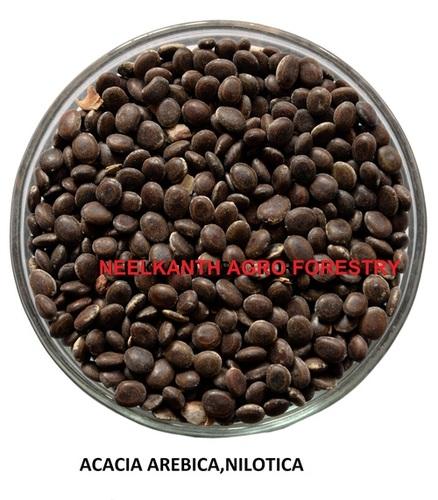 Acacia arebica nilotica