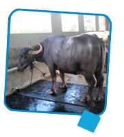 Supreme Cow Mat