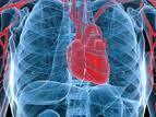 Herbal Cardiovascular Medicines