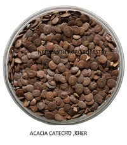 Acacia Catechu Kher