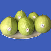 Fresh Guava Fruits