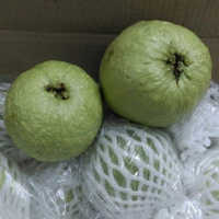 Green Guava