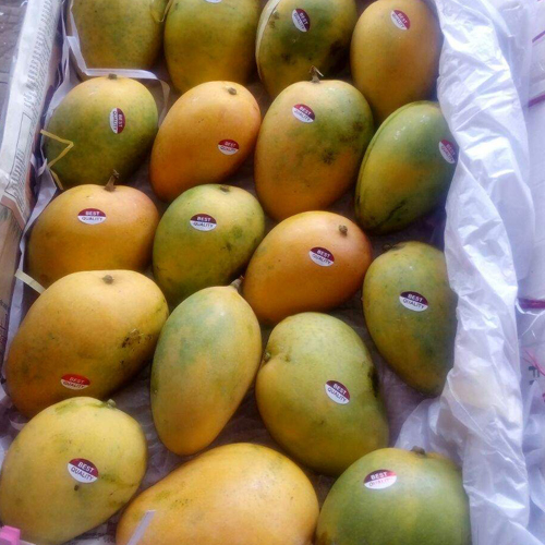 Farm Fresh Mango